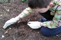 Ogrodnik Staś przysypuje ziemią nasionka